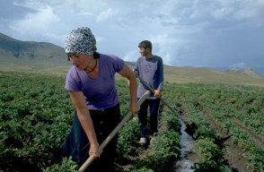 Armenia - North-West Agricultural Services Project - July 1999
